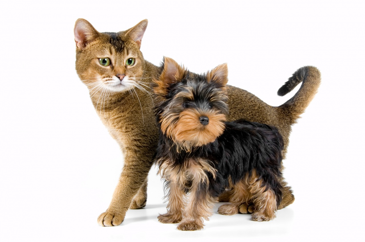 Dogs_Cats_Puppy_442167.jpg